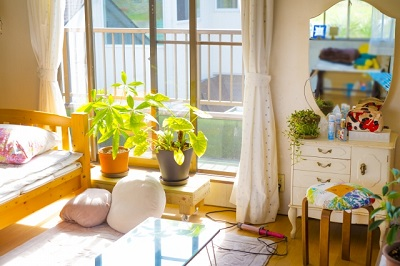 一人暮らし用の観葉植物