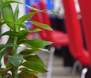 観葉植物と椅子